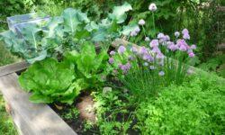 die Kinder-Gärten in Bergedorf-West - dank des Engagements vieler Beteiligter grünt es auch in Corona-Zeiten